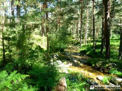 Pesquerías Reales - Monte de Valsaín; lagos de sanabria; camino smith;senderismo nivel alto